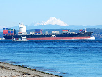 Mol Wonder With Mt. Baker in the Background